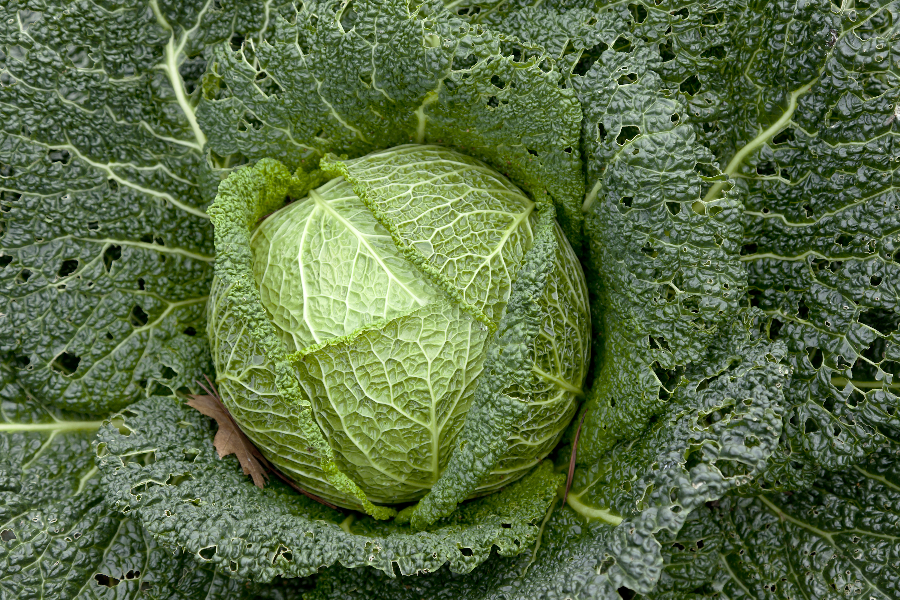 How To Cook Cabbage Great British Chefs