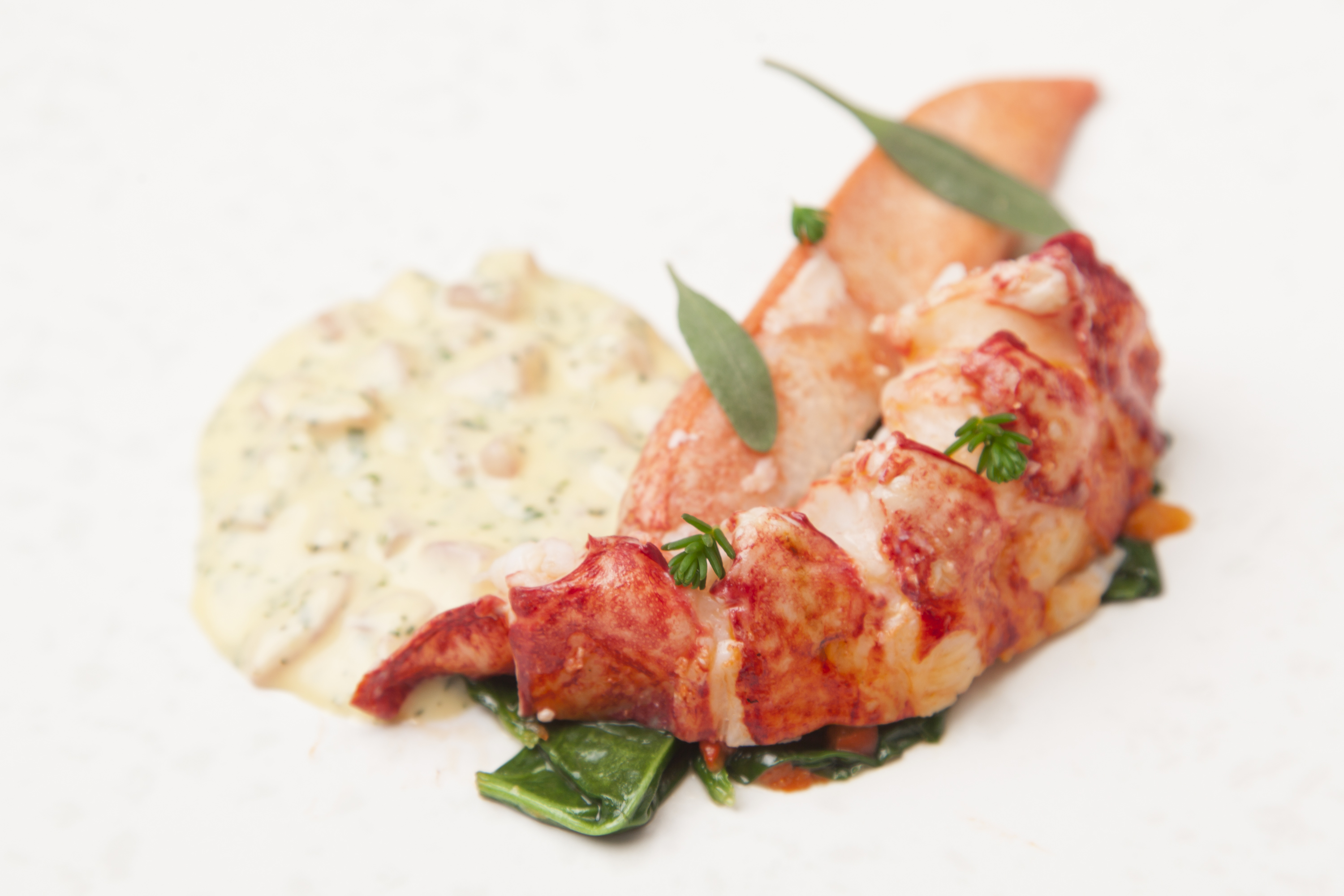 Sous Vide Lobster Tail Temperature - Best Lobster 2017